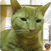 Adopt A Pet :: Elsa - Jenkintown, PA