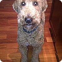 Adopt A Pet :: Gumby - Rigaud, QC
