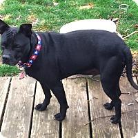 Adopt A Pet :: NAPOLEON - North Augusta, SC
