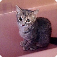 Adopt A Pet :: Sally - Colmar, PA