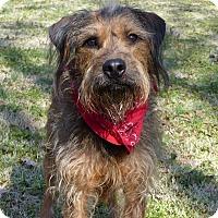 Adopt A Pet :: McGee - Mocksville, NC