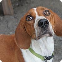 Adopt A Pet :: Nanny - Oakland, AR