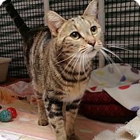 Adopt A Pet :: Angel - Diamond Springs, CA