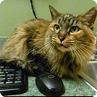 Adopt A Pet :: Six Pence - Phoenix, AZ