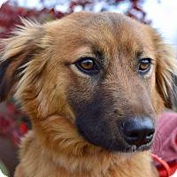 Adopt A Pet :: Flint - Allen town, PA