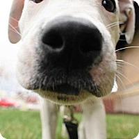 Adopt A Pet :: Riley - Fayette, MO