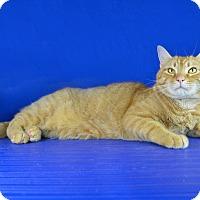 Adopt A Pet :: Cheyenne - Carencro, LA