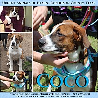 Adopt A Pet :: Coco - Hearne, TX