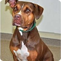 Adopt A Pet :: Sneakers - Port Washington, NY