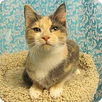 Adopt A Pet :: Adelaide - Covington, KY