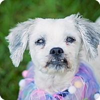 Adopt A Pet :: Nikki - Kingwood, TX