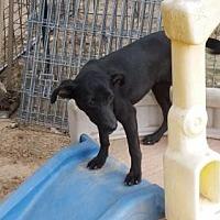 Adopt A Pet :: CeeCee - San Antonio, TX