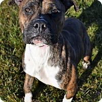 Adopt A Pet :: Tooney - Michigan City, IN