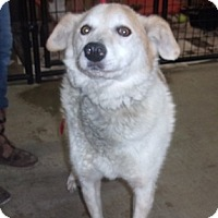 Adopt A Pet :: Frannie - Jamestown, TN