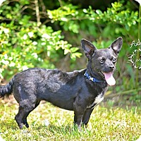 Adopt A Pet :: Maggie - Fort Valley, GA