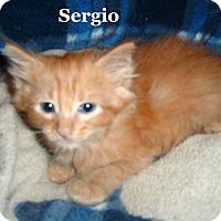 Adopt A Pet :: Sergio - Bentonville, AR