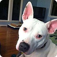 Adopt A Pet :: Mai Tai - Dayton, OH