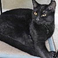 Adopt A Pet :: TOBIAS - Pt. Richmond, CA