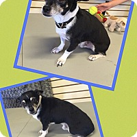 Adopt A Pet :: Remus - Scottsdale, AZ