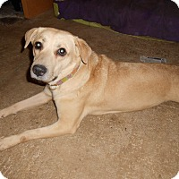 Adopt A Pet :: Trixie - North Jackson, OH