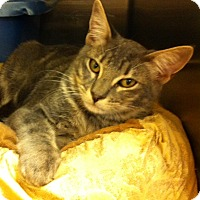 Adopt A Pet :: Gus - Madisonville, LA