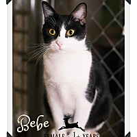 Adopt A Pet :: Be Be - Fallbrook, CA