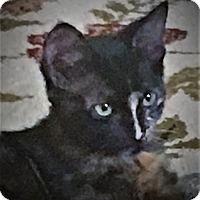 Adopt A Pet :: Precious - Coldspring, TX