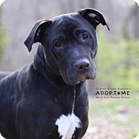 Adopt A Pet :: Purdie - Edwardsville, IL