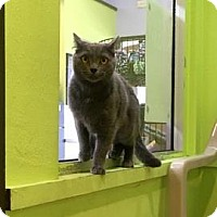 Adopt A Pet :: Sophie - Janesville, WI
