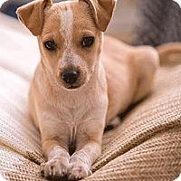 Adopt A Pet :: Slate - Oakland, CA