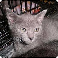 Adopt A Pet :: Garbo - Warren, MI