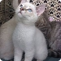 Adopt A Pet :: Mistletoe - Lantana, FL