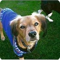 Adopt A Pet :: Boris - Scottsdale, AZ