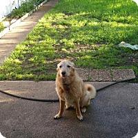 Adopt A Pet :: zzMaverick - Dallas, TX