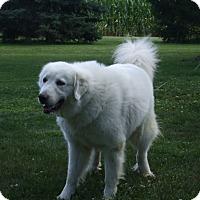 Adopt A Pet :: Schenlee - Upper Sandusky, OH