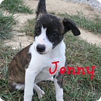 Adopt A Pet :: Jenny - Brazil, IN