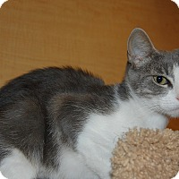 Adopt A Pet :: Kitty - Whittier, CA