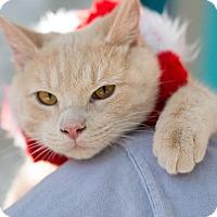 Adopt A Pet :: Elliott - Erwin, TN