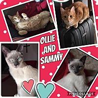 Adopt A Pet :: Sammy - Keller, TX