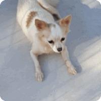 Adopt A Pet :: Sophia Marie - Fayetteville, GA