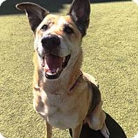 Adopt A Pet :: Missy - Pleasant Grove, CA