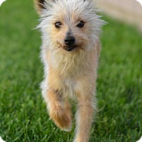 Adopt A Pet :: Einstein-PENDING ADOPTION - Manhattan, KS