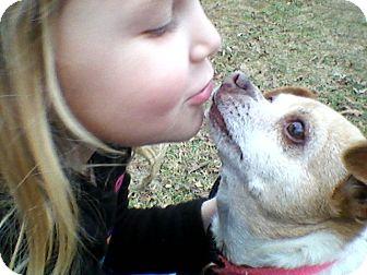 Chihuahua Mix Dog for adoption in Homewood, Alabama - Chrissie