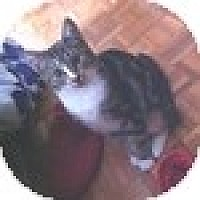 Adopt A Pet :: Astrid - Vancouver, BC