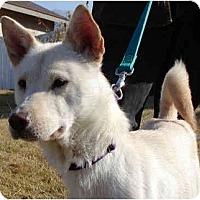 Adopt A Pet :: Soju - Marysville, CA