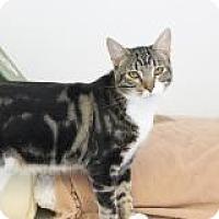 Adopt A Pet :: Danny - El Cajon, CA