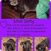 Adopt A Pet :: Betty- pending adoption - Fredericksburg, VA