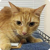 Adopt A Pet :: Mel - Trevose, PA