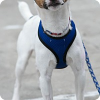 Adopt A Pet :: Hoppers - Mt. Prospect, IL
