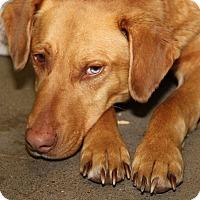 Adopt A Pet :: Daxter (Neutered) - Marietta, OH